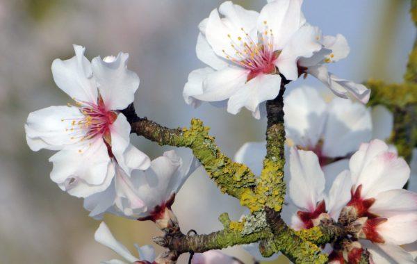 Frühlingserwachen – Aufblühen