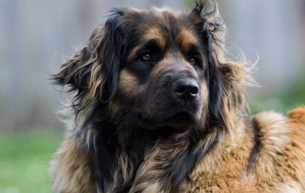 Hunde pflegen und verwöhnen